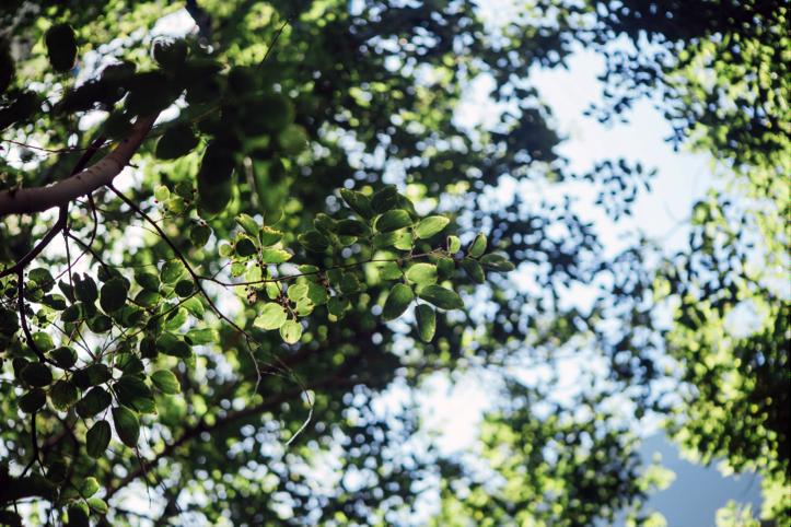 TRA TERRA E CIELO,  percorso sensoriale nei boschi, con Elena de Renzio